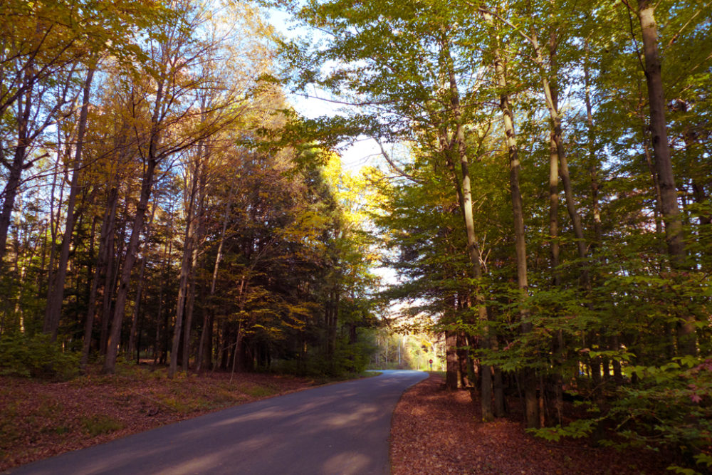 Lackawanna State Park Road in Autumn