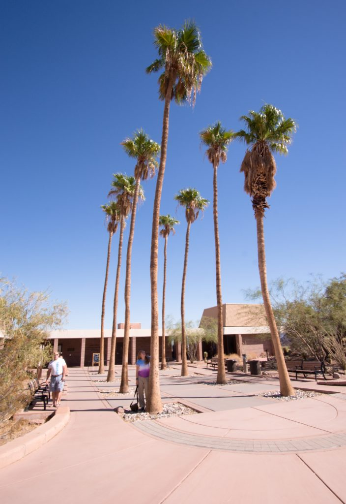 Lake Mead Visitors Center Palm Trees