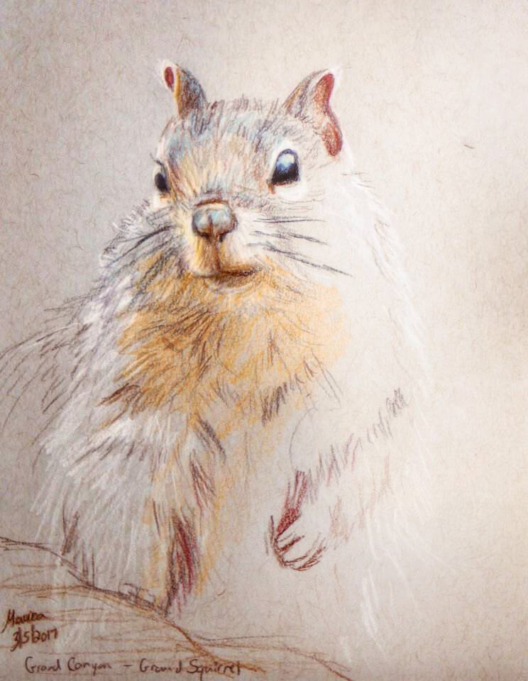 Colored Pencil, Grand Canyon Ground Squirrel artwork by Maura Elko