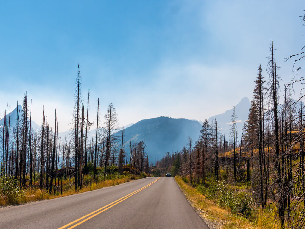 Glacier National Park dead trees from forest fires, wildfires.