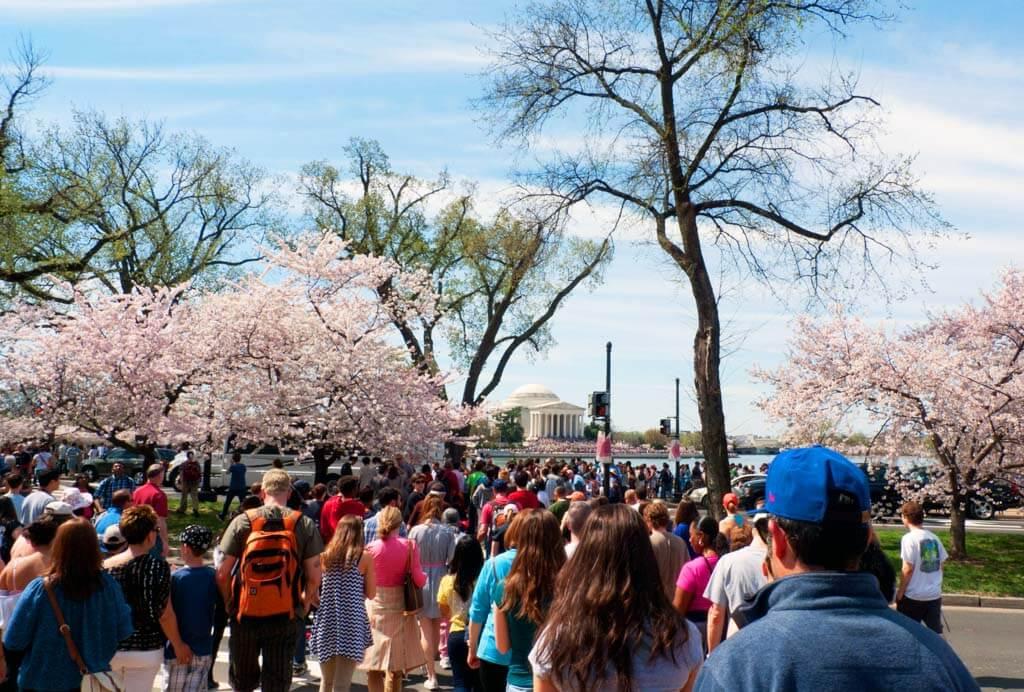 Cherry Blossom crowds