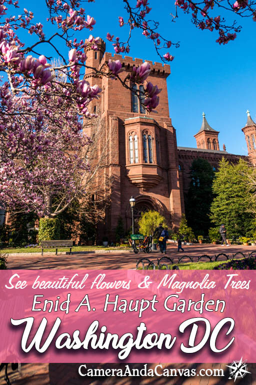 Did you arrive too early to see the Cherry Blossoms in bloom in Washington DC? Well you may be in luck to see another beautiful flowering tree in bloom: The Magnolia Trees! A quiet garden park right behind the Smithsonian Castle called the Enid A Haupt Garden is surrounded by them! It's definitely worth checking out at any time to see the different flowers in bloom there. #WashingtonDC #MagnoliaTrees #Magnolias #ParksinDC #WashingtonDCGardens #SmithsonianCastle
