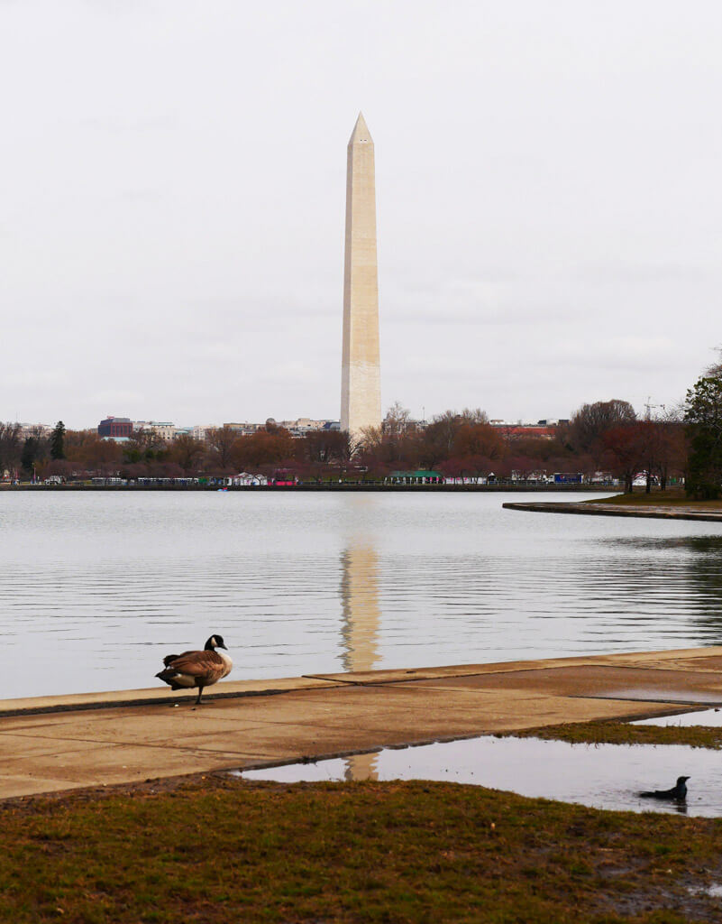Washington DC Monument 2018
