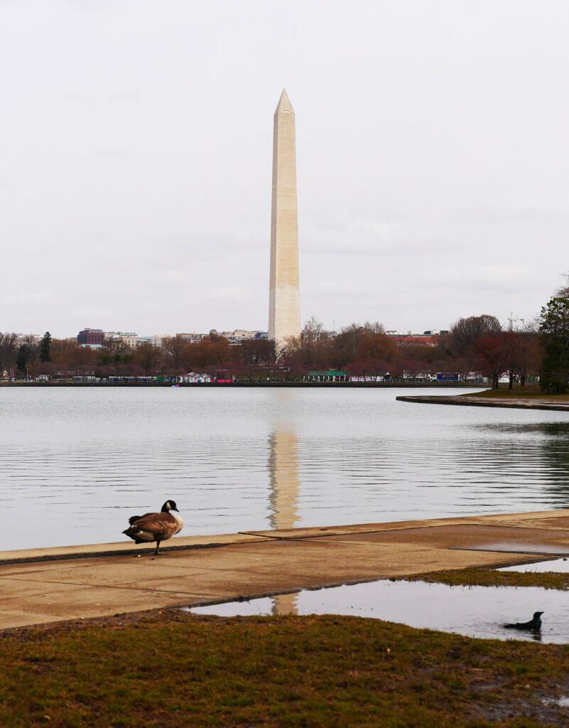 Washington DC Monument 2018