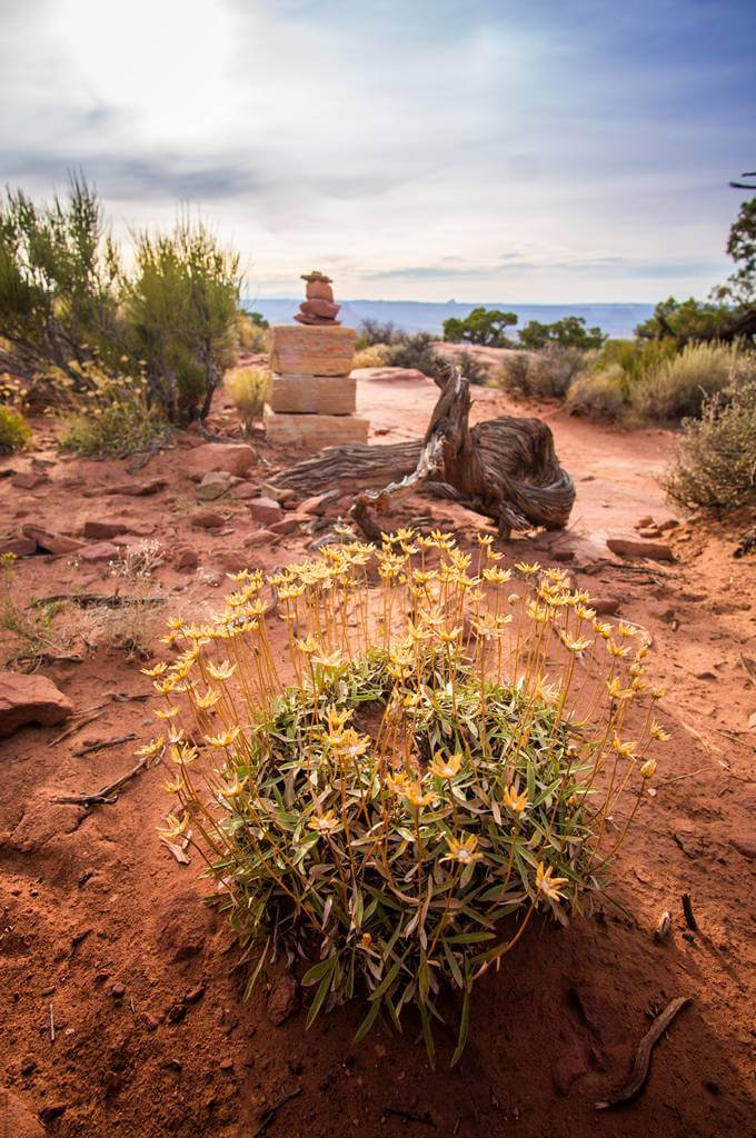 canyonlands plant life