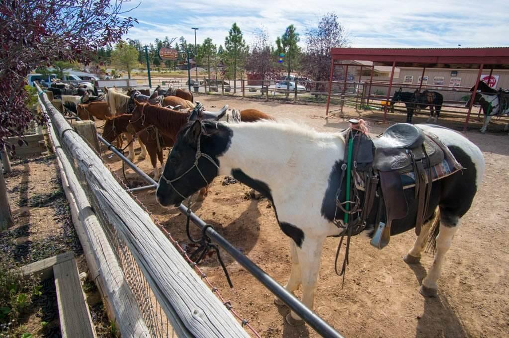 Horseback riding in Bryce